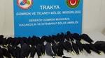 Dereköy Sınır Kapısı'nda otomobilde 45 papağan bulundu