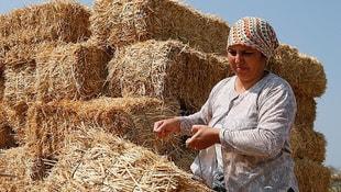 Temizlikçiliği bıraktı devlet desteğiyle çiftlik sahibi oldu