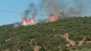 Ispartada orman yandı!