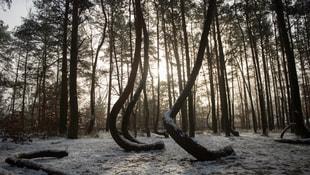 Bu ağaçların sırrını çözen olmadı!