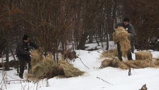 Bolu Dağı'nda yılkı atlarına yem bırakıldı