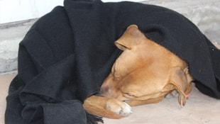 Soğukta sokak hayvanlarına battaniyeli önlem