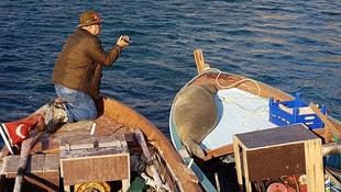 Akdeniz foku Karaburun Limanını mesken tuttu