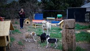 Anneleri ölen köpek yavrularını Afad emziriyor