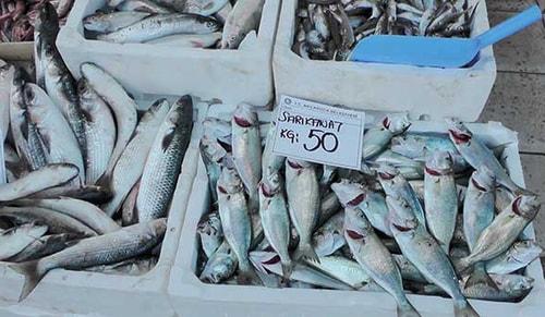 Balık kıtlığı tezgahları vurdu! Kilosu 50 TL
