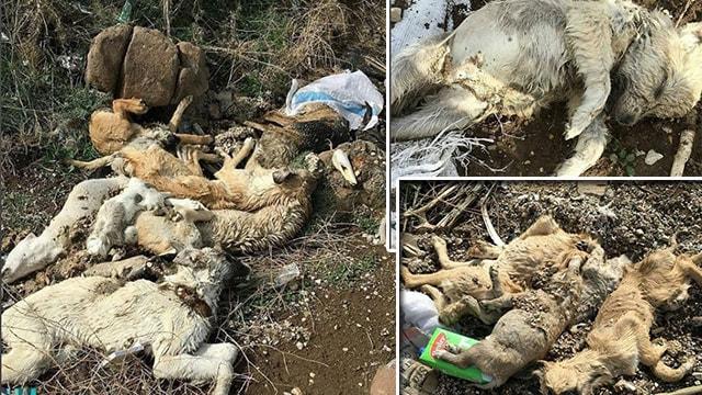 Kilis Belediyesi'nin ölüm çukurları
