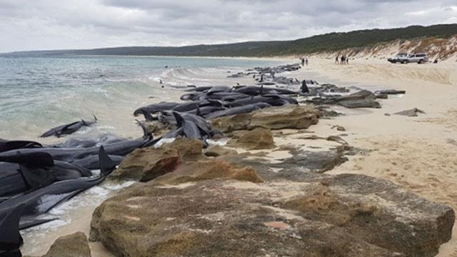 Avustralya sahilinde inanılmaz görüntü! 150si birden...