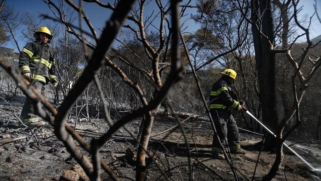 İsrail'de çıkan yangınlar dördüncü gününde