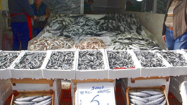 Karadenizli balıkçılar hamsi avında kota uygulaması istiyor