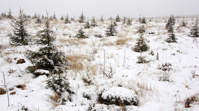 Mersin'de mevsimin ilk karı yağdı