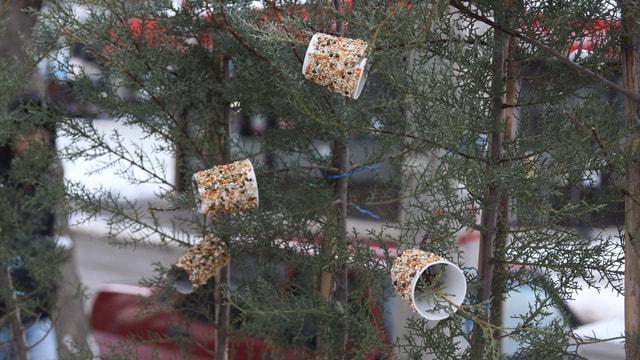 Çocuklardan kuşlar için yemlik