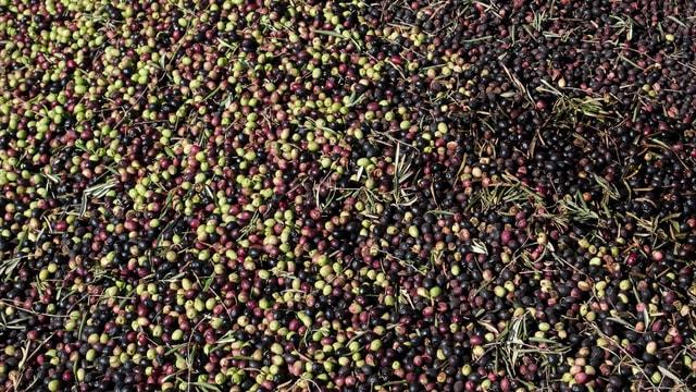 Fas'ın taş baskı zeytinyağı atölyeleri