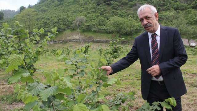 Geçen yıl ihraç edilen fındığın yüzde 52'si Trabzon'dan