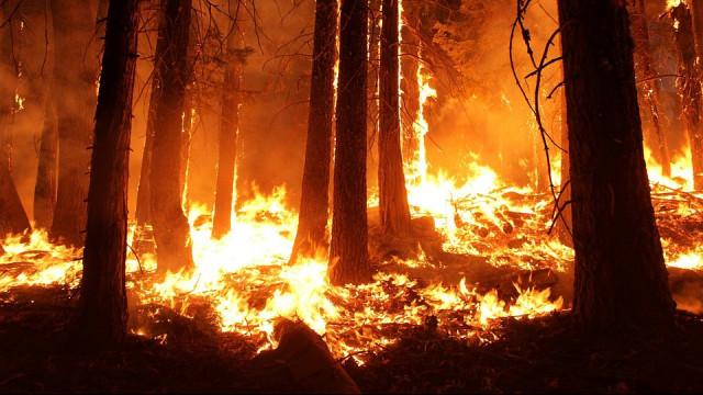 Tatil cennetinde mangal yangını!