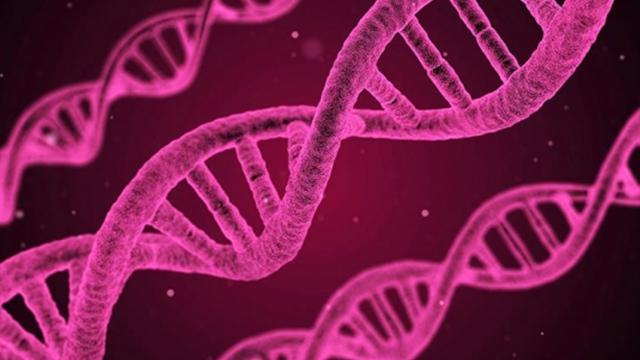 Yüzü şekillendiren 15 gen bulundu
